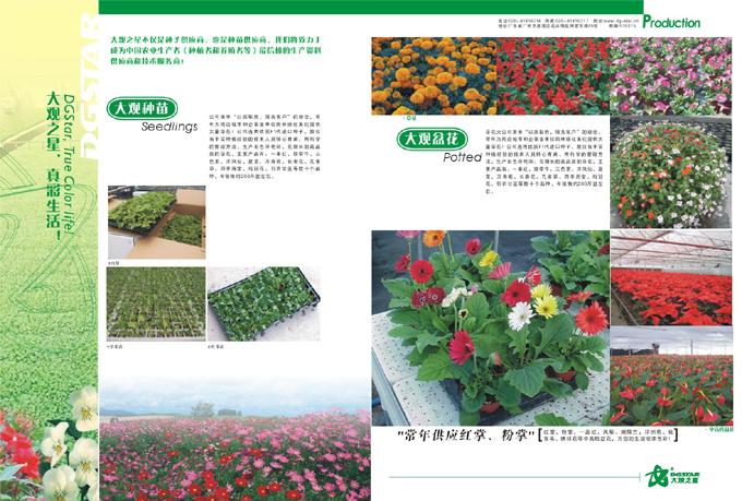 现金广州大观之星宣传册排版设计